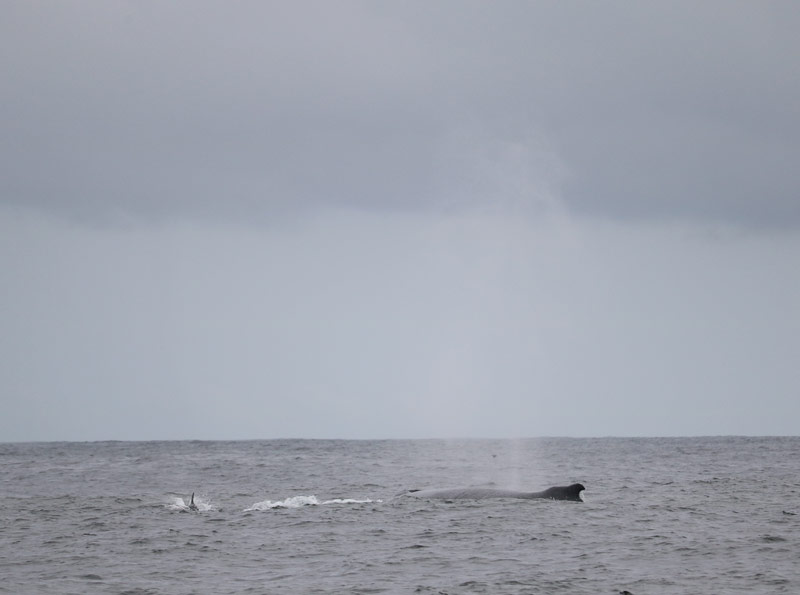 A whale blowing off the West Cork Coast